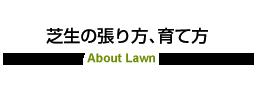 芝生の張り方、育て方